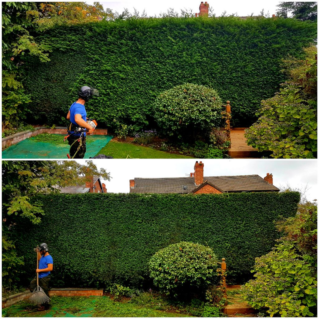 Hedge trimming Manchester. Tree Services Manchester.