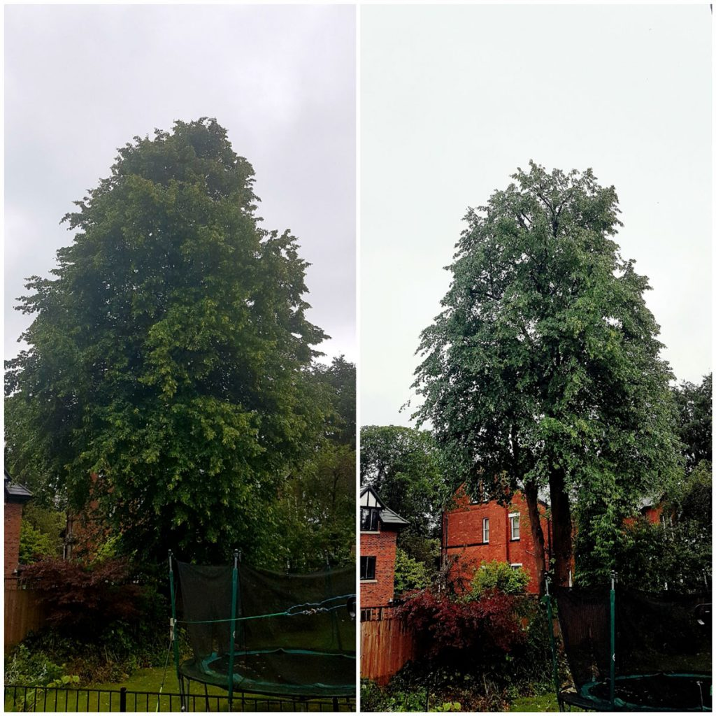 Tree pruning before and after. Tree surgeon Manchester
