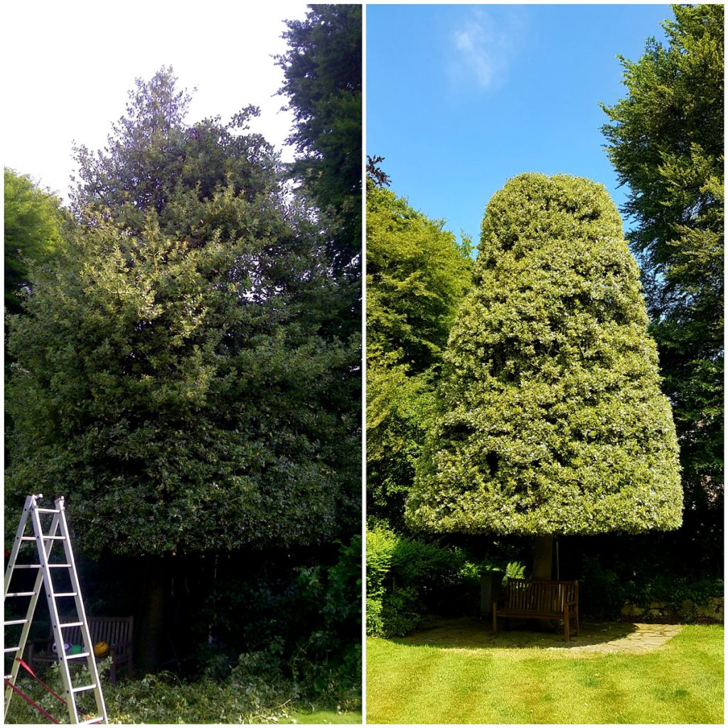 Tree pruning before and after. Tree surgeon Manchester.