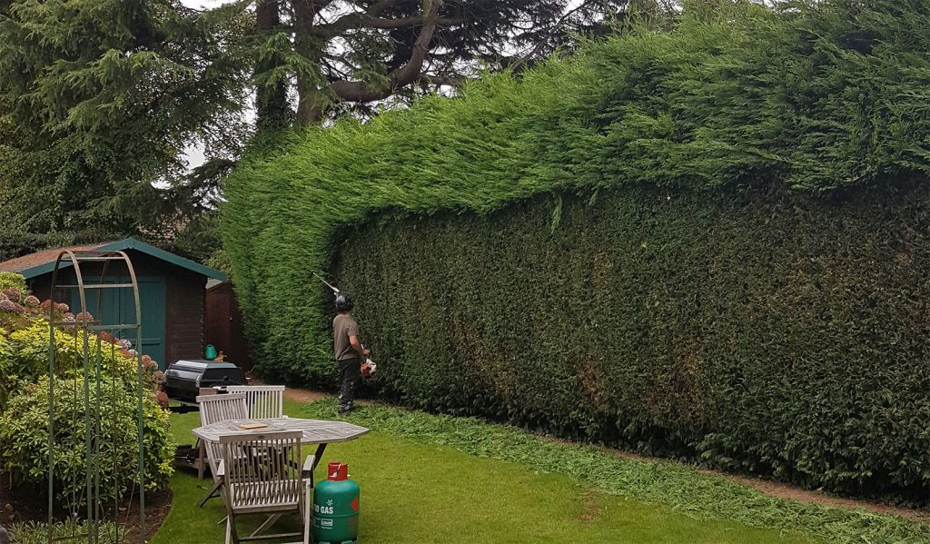 Hedge cutting Manchester. Tree Services Manchester.