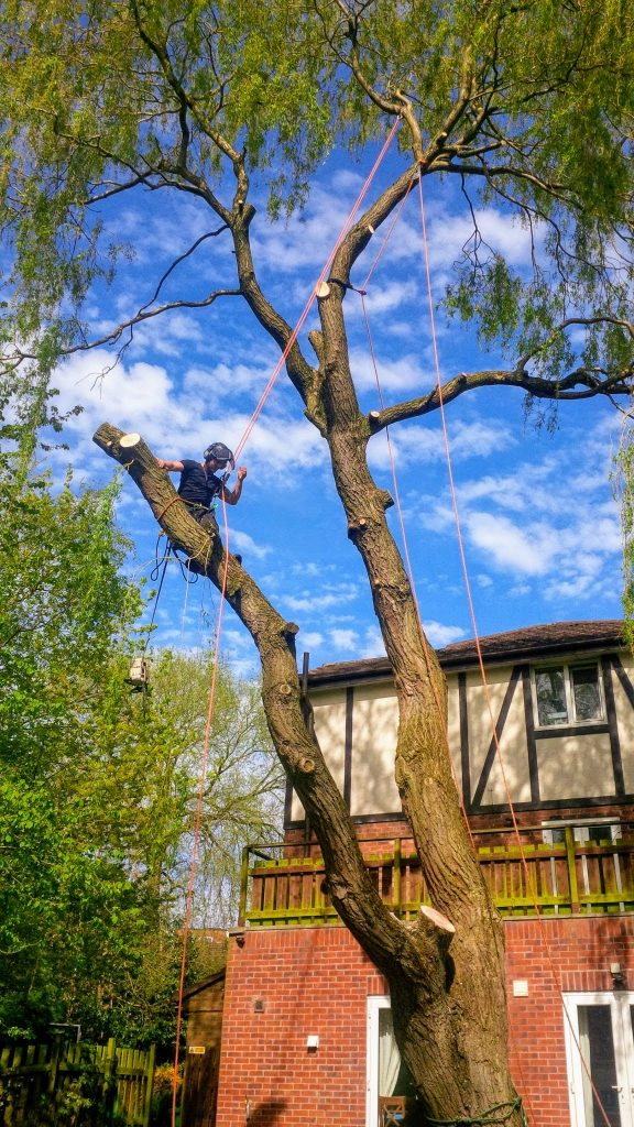 Aerial tree dismantle and removal in Manchester
