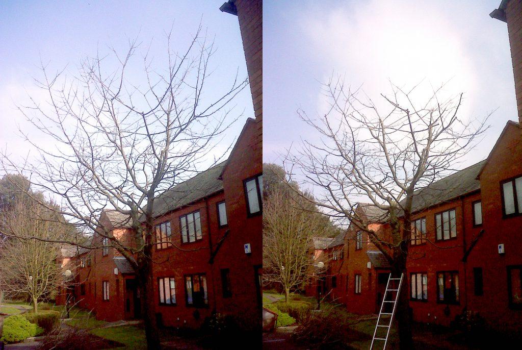 Cherry tree reduction