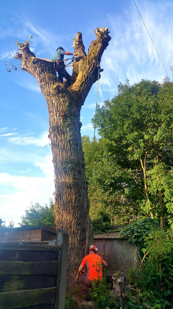 Dangerous tree removal in Manchester
