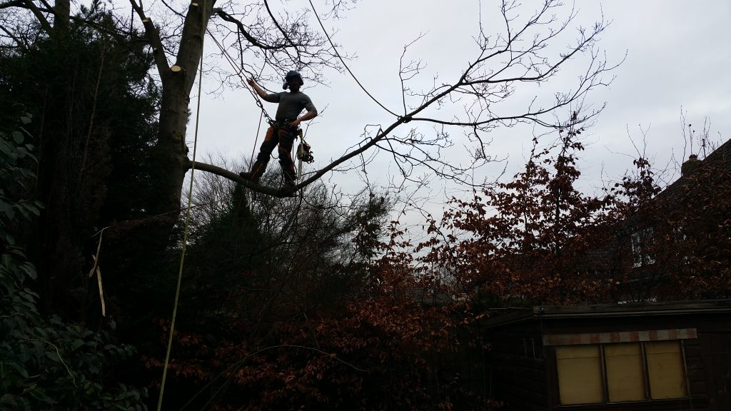 Sycamore tree removal in Manchester