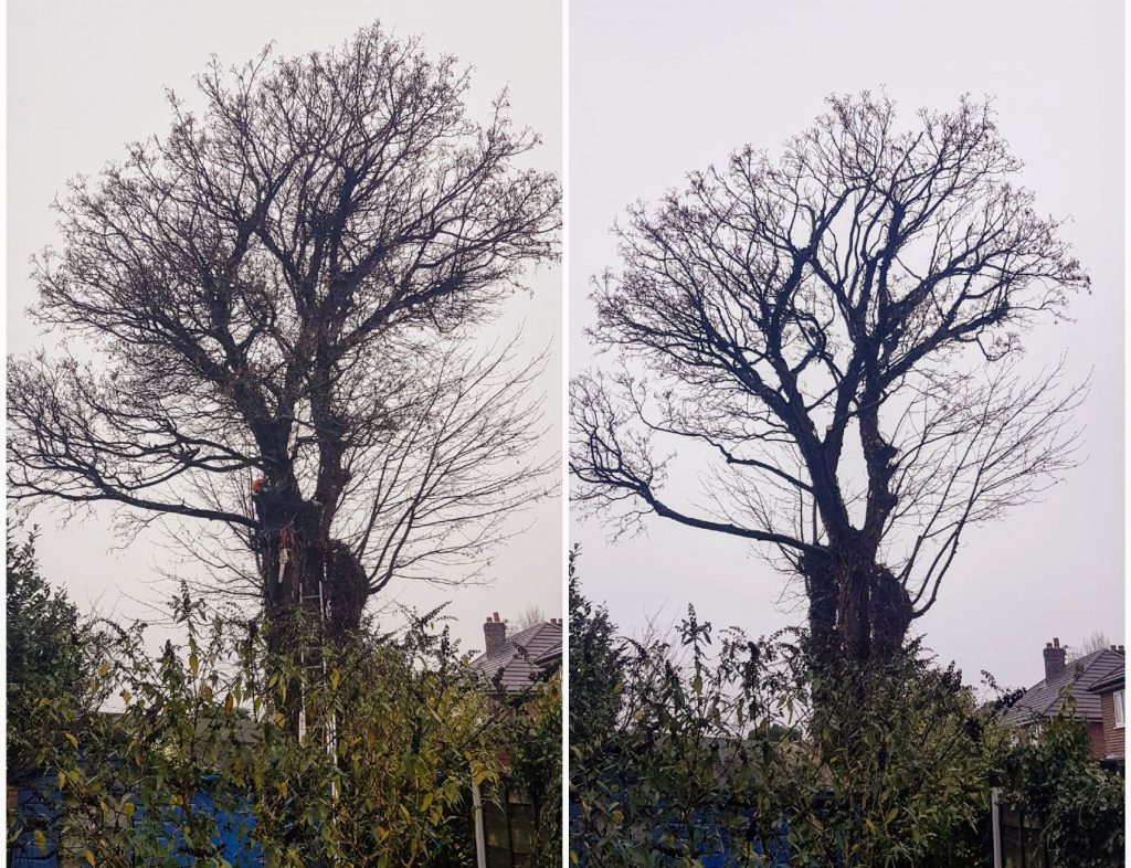 Tree pruning via Crown Clean